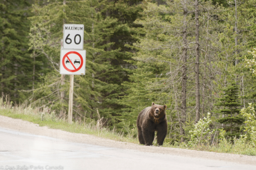 Be prepared when visiting Waterton