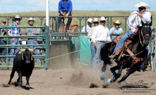 Team roping photo highlights